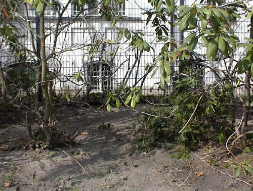 Rhododendron Und Azaleen: Rhododendron Pflanzen, Pflegen