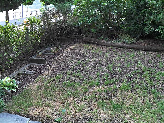 Arkadia Gartengestaltung Berlin Die Fruhjahrskur Fur Ihren Rasen